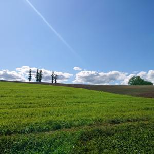 感動の美しき美瑛!パッチワークの丘!青い池!
