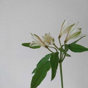 【花のある生活】小ぶりなユリの花