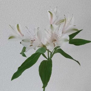 【花のある生活】ユリの花咲いた
