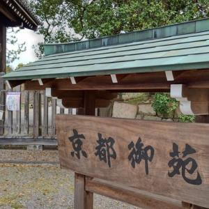 今年も京都御苑の枝垂れ桜を観に
