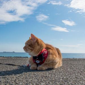 【伊勢志摩】ローカルな海岸で癒しの散歩。やっぱりおすすめしたい、五感で感じる癒しの時間。