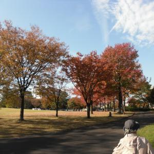 ご近所で秋晴れと紅葉を満喫