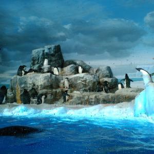 お天気に恵まれた連休4日目水族館に行きました。