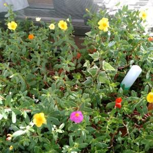 ほうっておいてもすくすく育つ植物が好き。