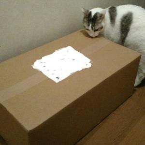 付知ひのきの猫プランター届きました。