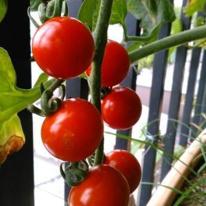 給料前に野菜の現物支給で家計が助かる。