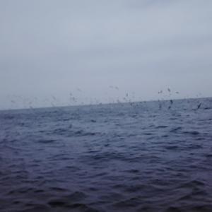 5月14日釣行 やっと春の海
