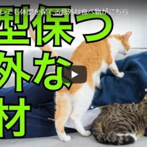 【Daigo】ダイエット動画まとめ-ゆるい筋トレでも体型を保てる意外な食べ物がこちら-