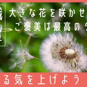 【意識改革】大きな花を咲かせよう!ご褒美は「やる気」を上げる最高のタネ!