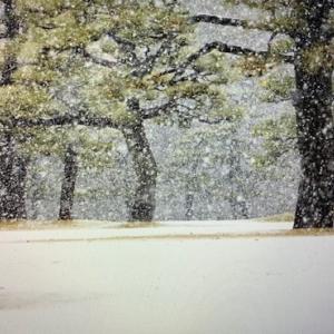 春が何処かに・・・春の雪