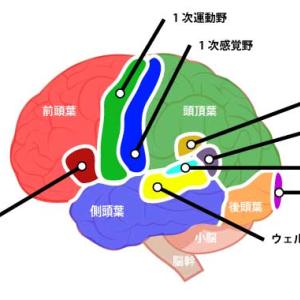 理学療法士 国家試験 解剖学 第8回