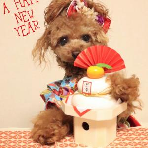⋆happy  new year2020*