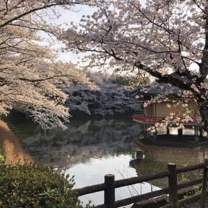 奈良に桜の小旅行★ミシュラン1つ星『味の風のにしむら』へ♪