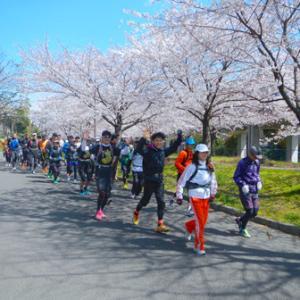 名古屋の主要な桜スポットがライトアップ中止決定、今年も静かなお花見ランに。