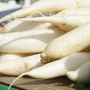 【冬野菜の季節】大根が大量に