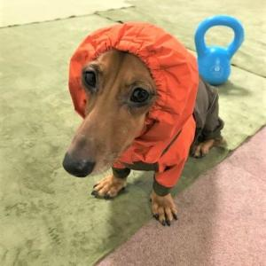 【冬支度】犬用つなぎ【真冬の散歩用】