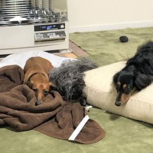 【多頭飼い】犬たちの関係性のこと