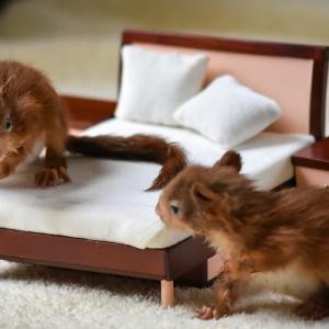 【夫婦は、一緒のベッドで寝るもの?】それとも・・・