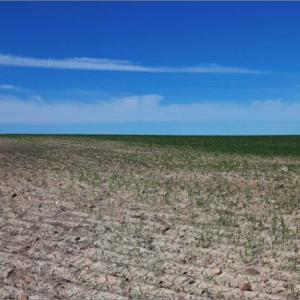 アメリカ西部に過去35年で最大の「バッタの大群」が侵入。過去最大級の空中農薬散布プログラムを開始