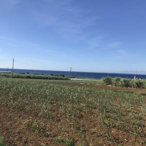 沖縄ロードバイク 残波岬