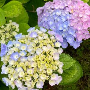 私が伊丹市で整備している、コミュニティ花壇です♪