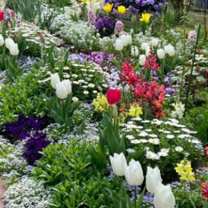 今年も伊丹市で、コミュニティ花壇整備を頑張ります!