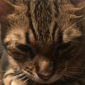 吾輩は猫である⑤