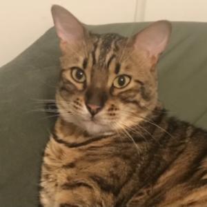猫の表情の変化8選、表情筋はなくとも分かる違い