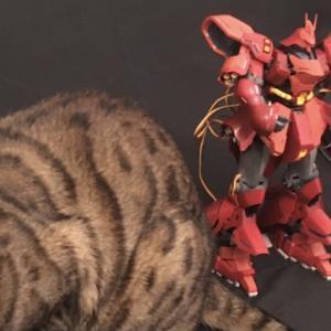 赤いサザビーと茶色い猫