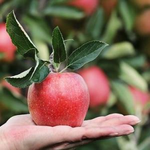りんごは皮ごと加熱すると栄養が数倍に⁈【その6つの効果とは】