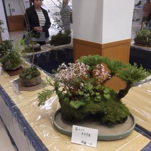 有度山草会の展示を見に行ってきました。