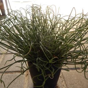 南アの植物