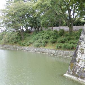 駿府城の内堀に咲く彼岸花