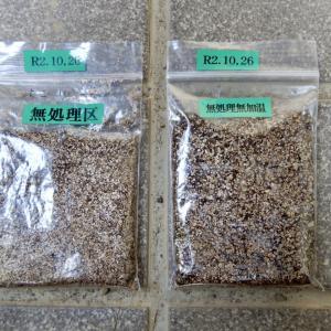 キツネノカミソリ種子の早期出葉のために温度処理を加える試み