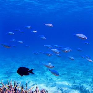 今日の宮古島の天気&八重干瀬の海況とツアー開催状況 2020年8月3日(月)