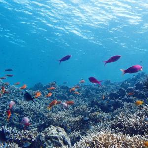 今日の宮古島の天気&八重干瀬の海況とツアー開催状況 2020年11月11日(水)