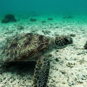 今日の宮古島の天気&八重干瀬の海況とツアー開催状況 2020年10月13日(火)