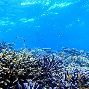 今日の宮古島の天気&八重干瀬の海況とツアー開催状況 2020年10月28日(水)