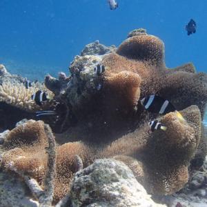 今日の宮古島の天気&八重干瀬の海況とツアー開催状況 2021年9月24日(金)