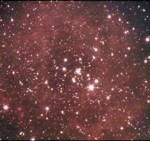 はみ出すバラ星雲:フィルターレス改造SV305:レンズレス・シュミット化NEWTONY君