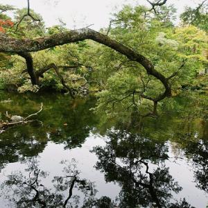 ⑭五色沼〜宇都宮餃子