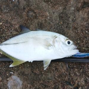 魚群の正体。
