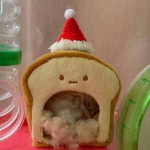 クリスマスにすき焼き