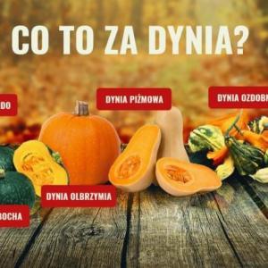 pumpkins かぼちゃ
