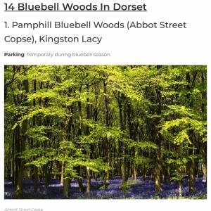 bluebells woods ブルーベルの森