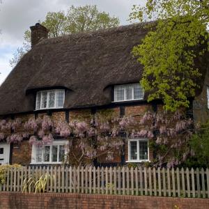 wisterias in wimborne ウィンボーンの藤