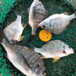 今日の釣りはボウズでした