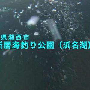 浜名湖 新居海釣り公園水中映像