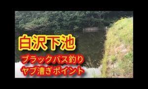 白沢下池 ブラックバス少しヤブ漕ぎポイント 愛知県美浜町魚釣りスポット