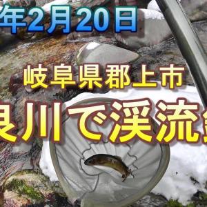 2020年2月20日 岐阜県長良川の上流で渓流釣り